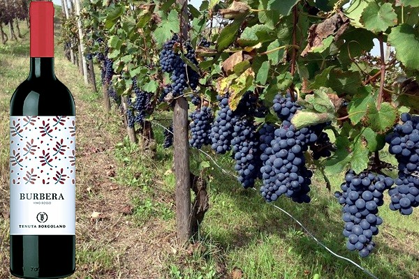 Burbera vino rosso L91571