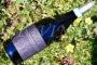 Taste Alto Piemonte 2021: dal Prünent alla Vespolina, dall'Erbaluce all'Uva rara, 47 vini per raccontarlo