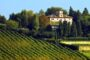 Piandimare: una cooperativa che ha puntato tutto sul vitigno Montepulciano