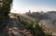 Terre Alfieri, la conquista di un'identità specifica nel panorama vitivinicolo piemontese