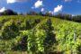Azienda Agricola Boffalora: la Sassella di Giuseppe Guglielmo